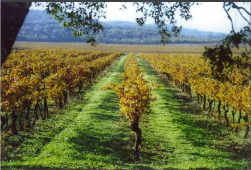 Purchase / Sale Vineyard Var