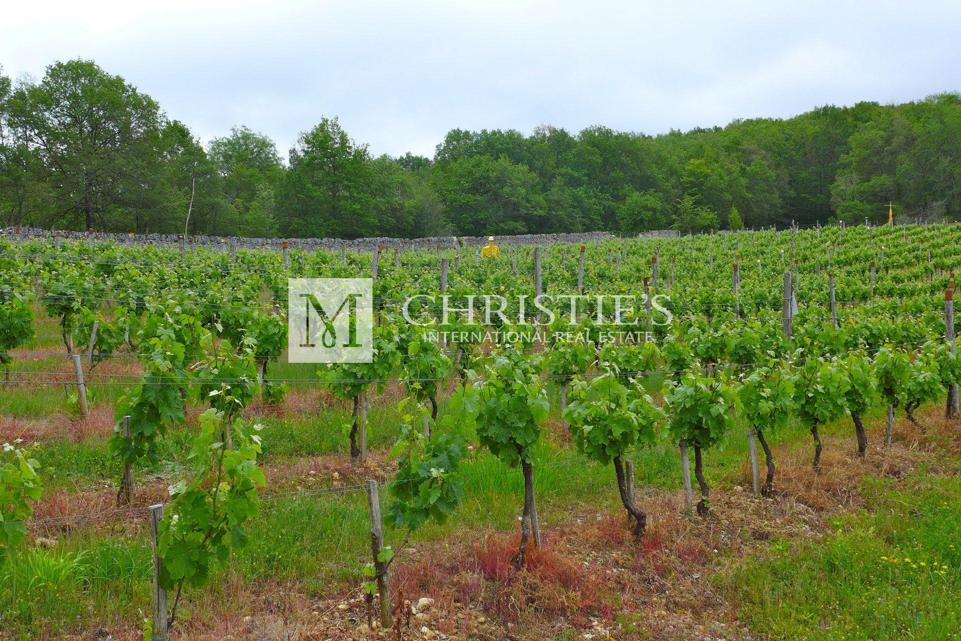 Chateau and domaine with hobby vineyard for sale in Lot