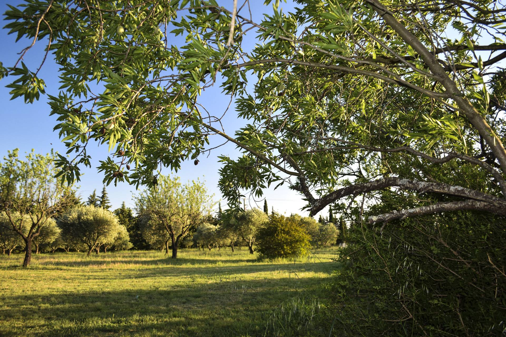 fields around 2  renovated country house on 8 ha, swimming pool, caretaker's house, aups var, provence