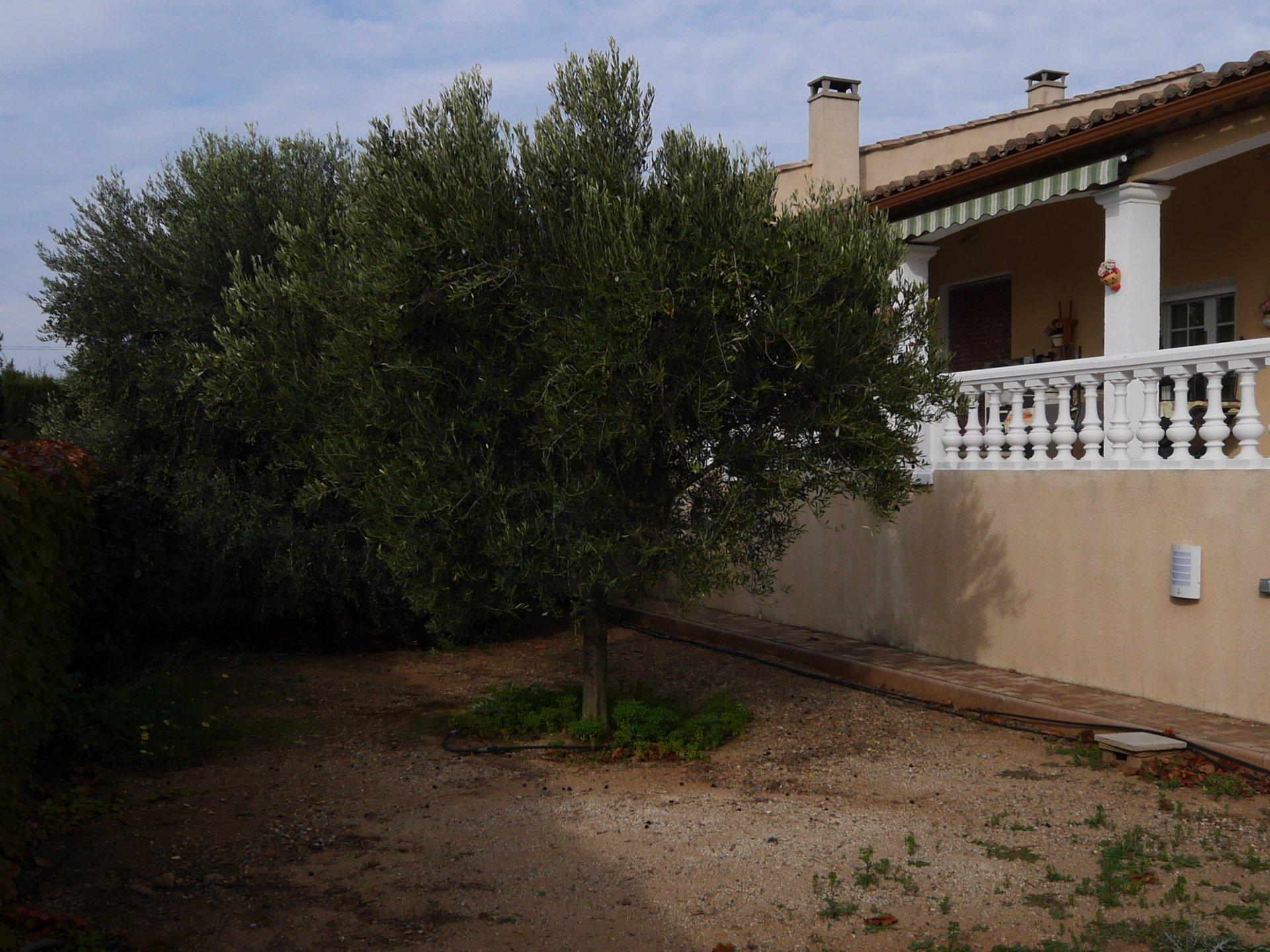 Maison aux oiviers