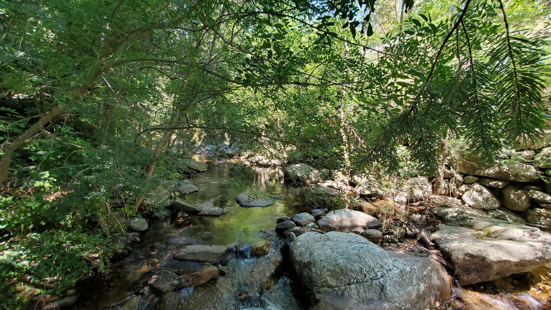 Två fastigheter belägna i en fridfull oas av grönska