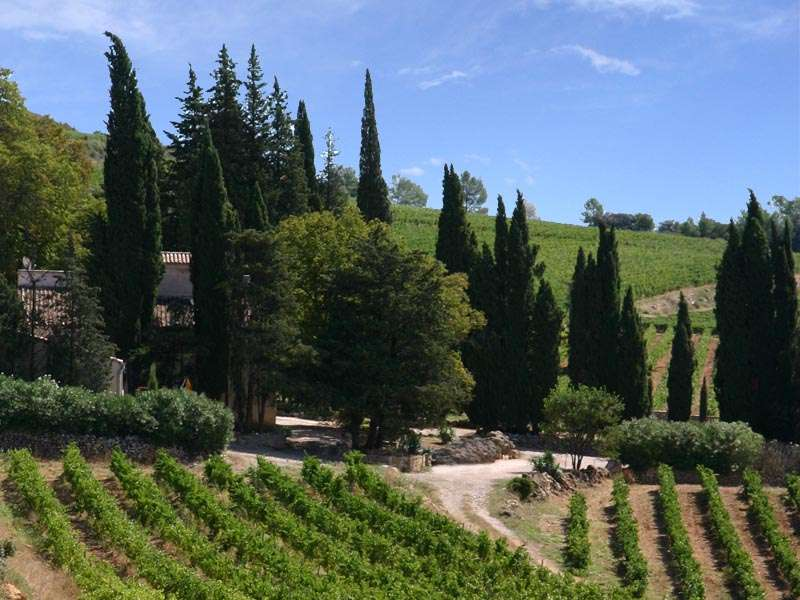 Provence; 90 hectare vineyard